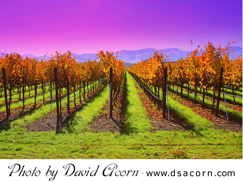david_acorn_vineyard_pleasanton ruby hill